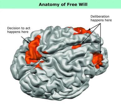 free-will-neuroscience-neurosciencenews